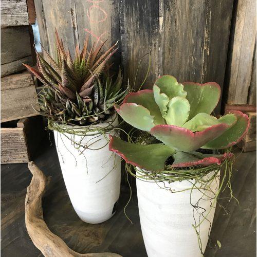 modern-succulents